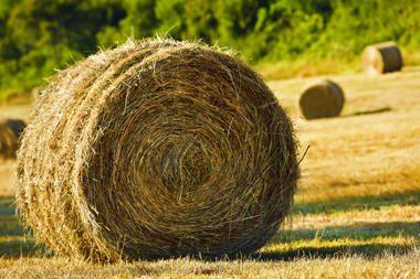 Smulkieji ūkininkai nestokos ES paramos