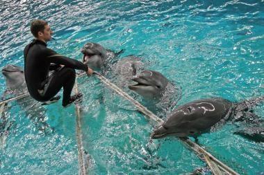 Pedofilų aukoms – delfinų terapija