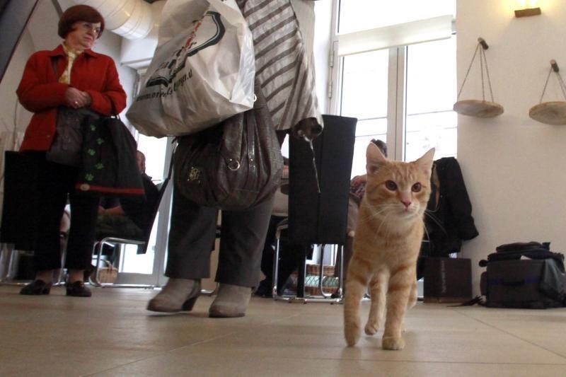 Per didelis katės maisto troškimas gali reikšti psichologinį sutrikimą