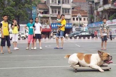 Šuniukas - riedlentininkas