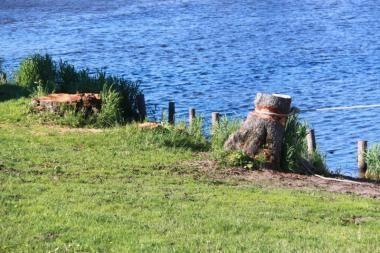 Prokurorai tiria Mingės kaime iškirstų medžių bylą
