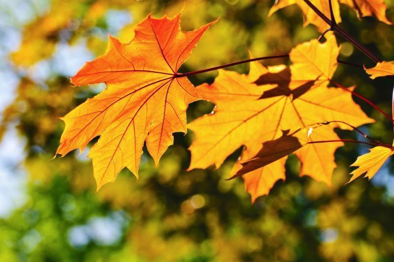 Savaitgalis nusimato rudeniškas ir saulėtas