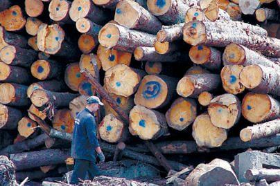 Policija toliau gaudo miškų teršėjus