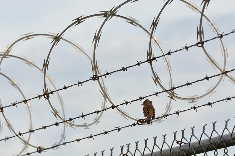 Į Marijampolės pataisos namus bandyta permesti narkotikų