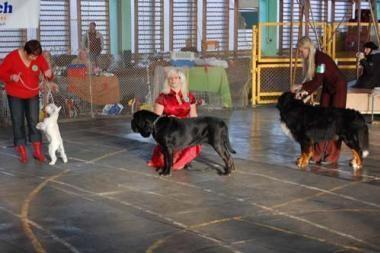 Šiauliuose - visų veislių šunų paroda
