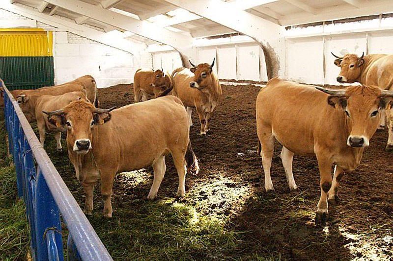 Ūkininkai laiko vis mažiau karvių, kai kurie visai atsisako pieno ūkių