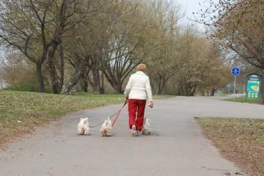 Parlamentarai balsuos dėl pensijos amžiaus pailginimo iki 65 metų