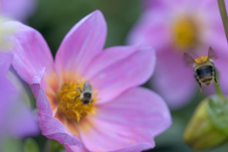 """Kai kurioms šalims bites jau tenka """"samdytis"""""""