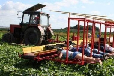 Nacionaliniai Baltarusijos žemės ūkio ypatumai