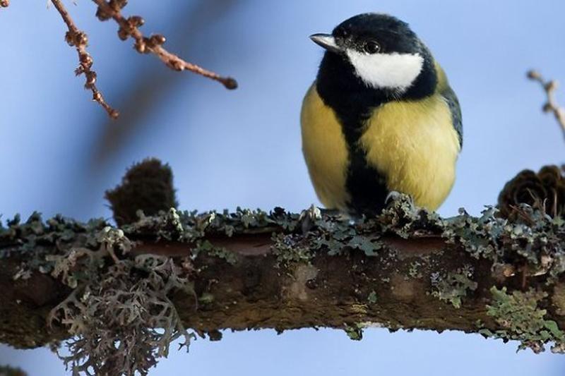 Gyvūnai žiemą: paukšteliai šiaušia plunksnas, o ką veikia briedžiai?