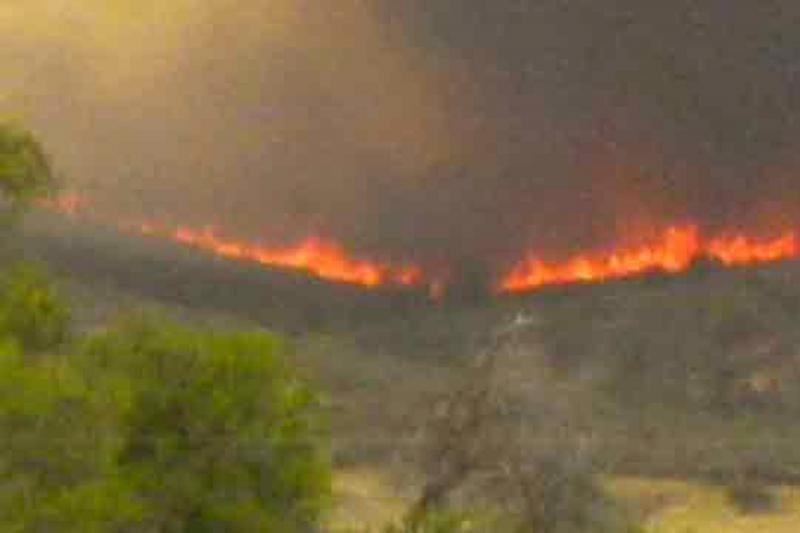 Arizonoje liepsnos pareikalavo 19 ugniagesių gyvybių