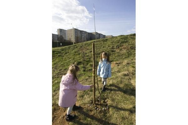 """""""Saulės"""" mokykla Viršuliškėse pasodino ąžuolų parką"""