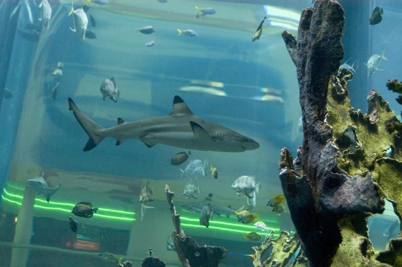 Kaune dienos šviesą išvys ryklio jaunikliai?