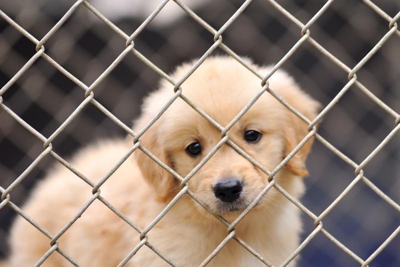 Kaip vykdomas draudimas prekiauti šunų ir kačių kailiais?