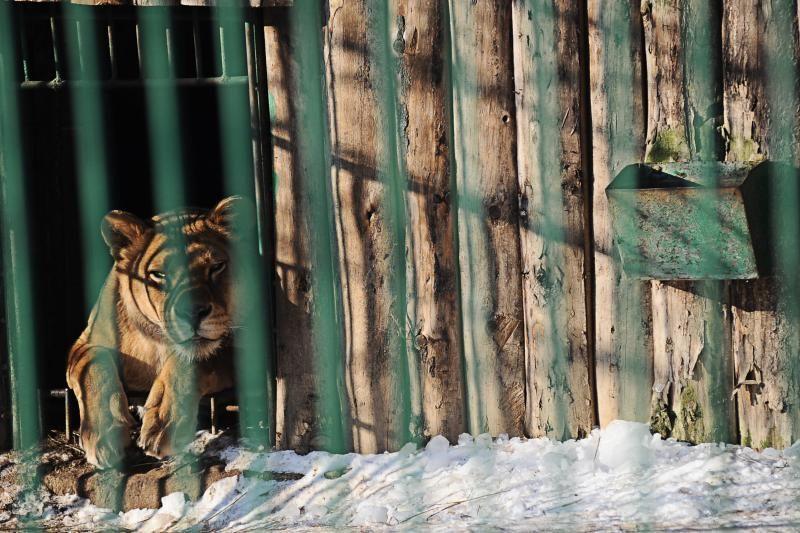 Per šalčius zoologijos sodo gyventojai dietos nesilaiko
