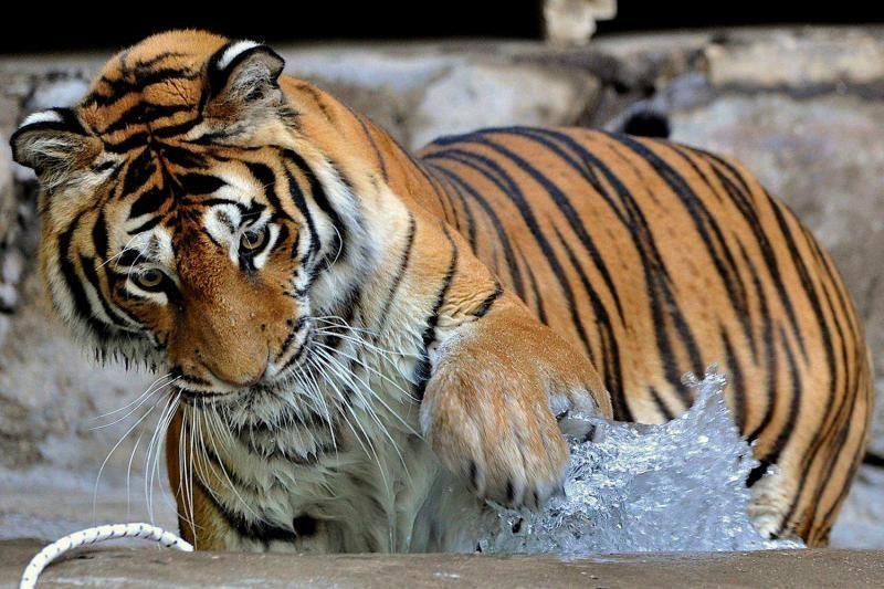 Romos zoologijos sode gyvūnai vaišinami ledais