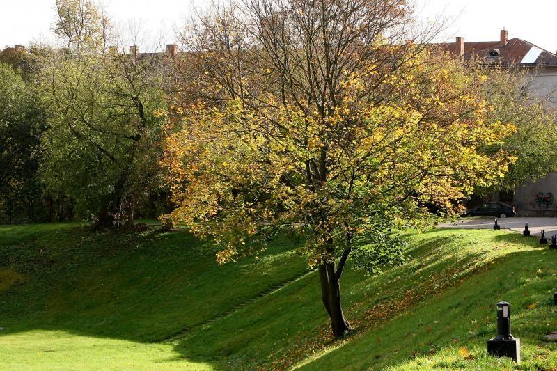 Miesto gatves nuklojusius lapus išveš už 90 tūkst. litų