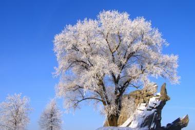 Žiema dideliais šalčiais spiginti neturėtų