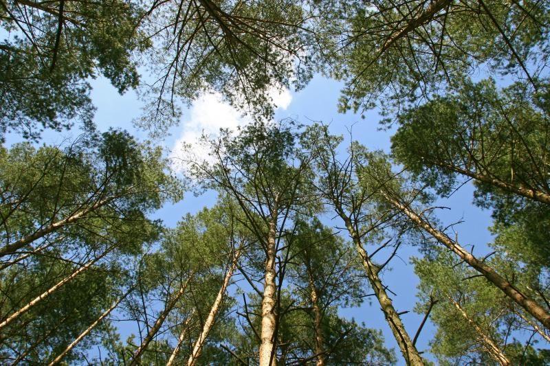 Nauja miškų pardavimo tvarka atveria piktnaudžiavimo galimybes