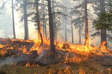 Šalyje miško gaisrų padaugėjo penkis kartus