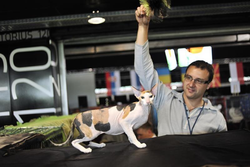 """""""Žalgirio"""" arenoje – įspūdinga tarptautinė kačių paroda"""