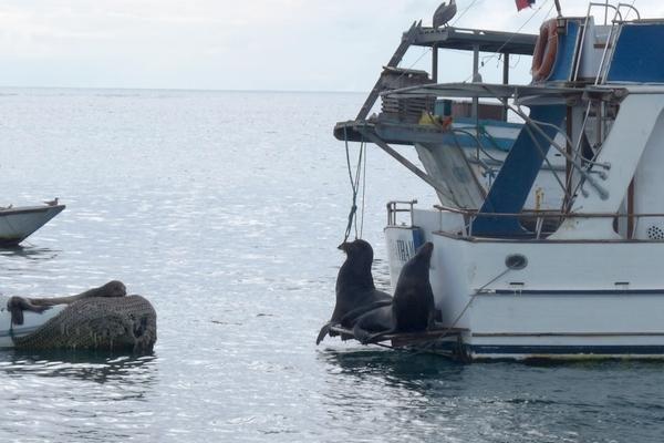 """""""Ragainė II"""" plaukia į Prancūzų Polineziją"""