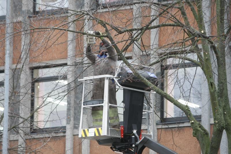Medžius geninčius darbuotojus atakavo bulvėmis