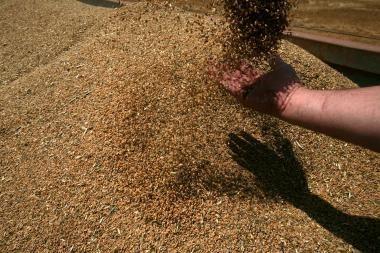 Grūdų augintojai planuoja burtis į kooperatyvą