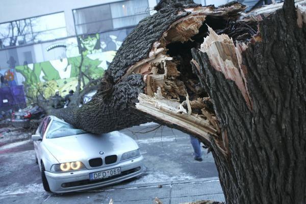 Kauno valdžia purtosi atsakomybės už mašinas suknežinusį medį