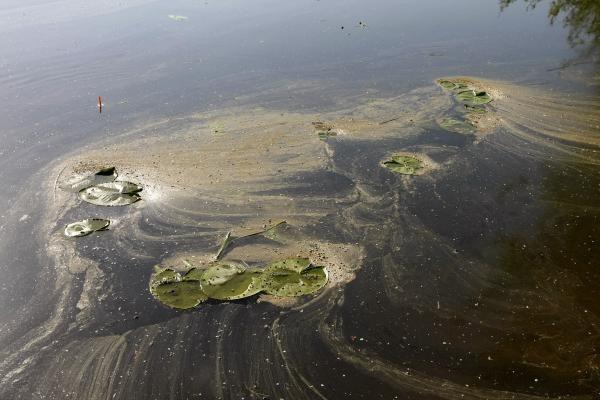 Danės upė paplūdo teršalais