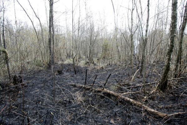 Širvintų r. sprogo dujotiekio vamzdis, kilo didžiulis gaisras (papildyta 14.30 val.)