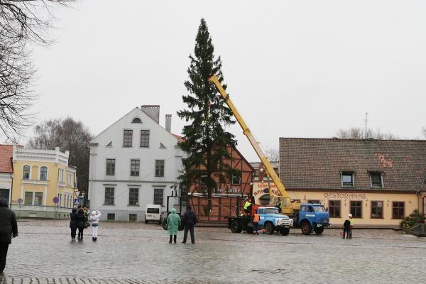 Šventinė eglė jau atvežta į Klaipėdą