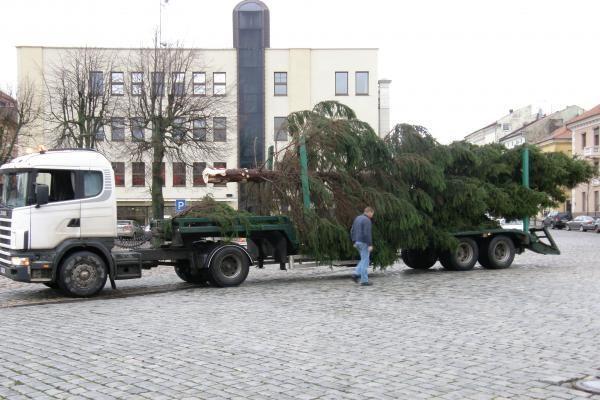 Į Teatro aikštę atvežta kalėdinė eglė