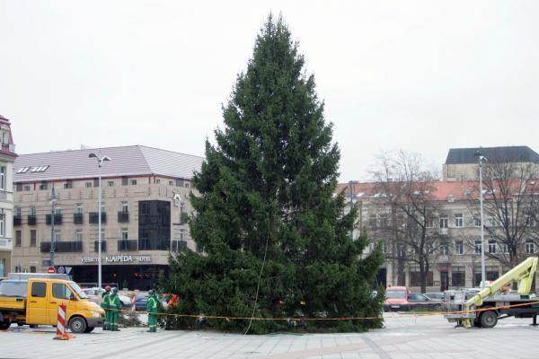 Katedros aikštėje statoma tikra eglė (papildyta)