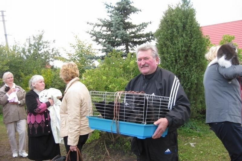 Užsienio veterinarai Klaipėdoje sterilizavo 268 gyvūnus