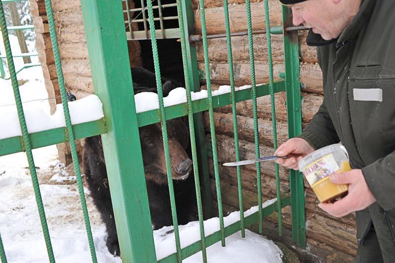 Žvėrių mylėtojo nepuola net ir alkani vilkai