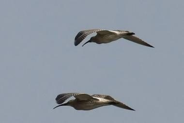 Kuršių nerijos nacionaliniame parke  – paukščių paroda