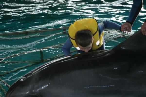 Delfinariumas uždaromas rekonstrukcijai, delfinai skraidinami į Graikiją
