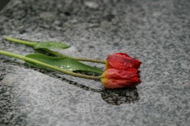 Mirė dailėtyrininkė Zita Žemaitytė