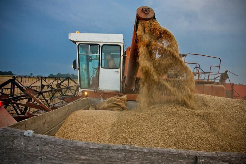 Rusija nuo liepos atšauks draudimą eksportuoti grūdus