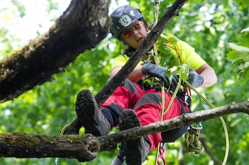 Laipiojimas po medžius – ne tik žaidimas