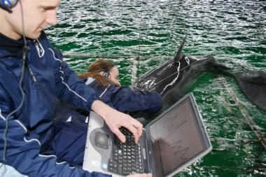 Uostamiesčio treneriai jau supranta delfinų kalbą (balandžio 1-osios pokštas)