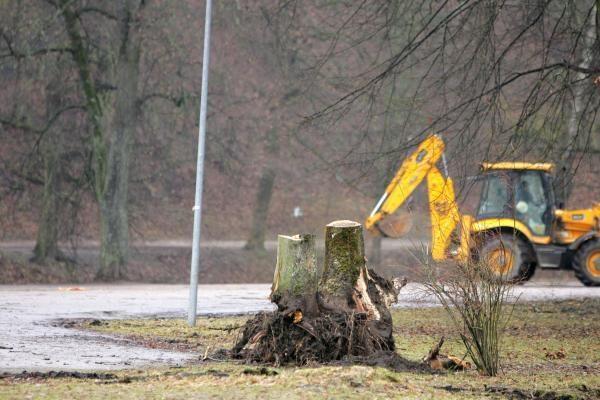 Iškirsti medžiai Sereikiškių parke papiktino vilniečius (papildyta)