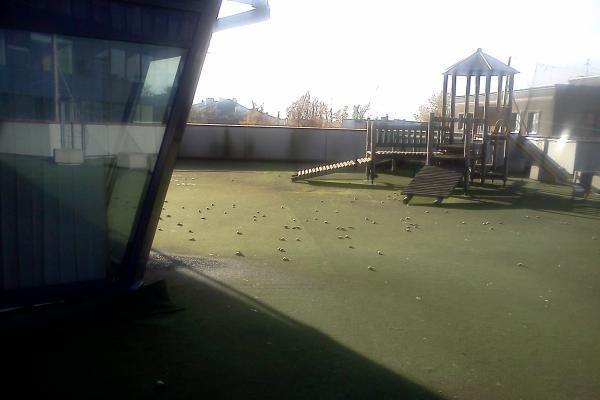 """Klaipėdoje """"tebelyja"""" negyvais paukšteliais"""