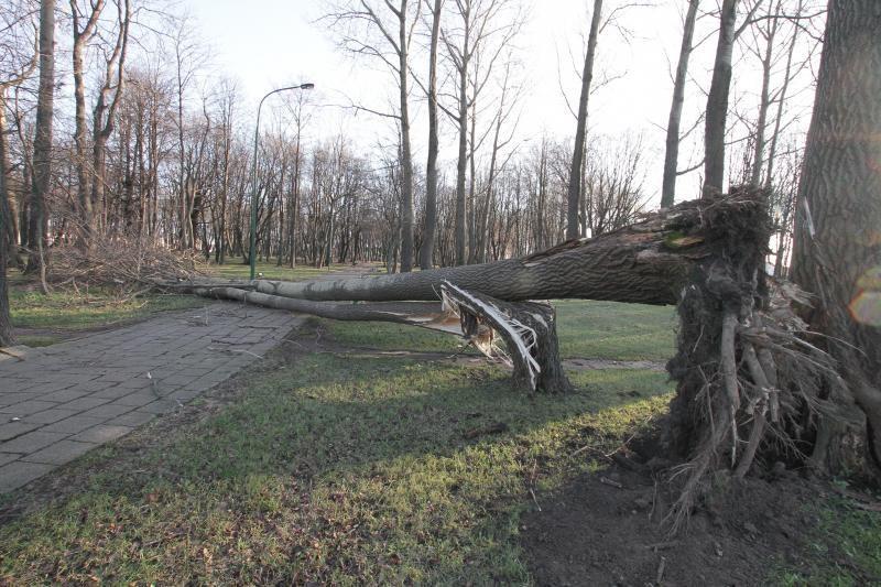 Šalia Lenkijos ir Lietuvos pasienio prognozuojamas uraganinis vėjas