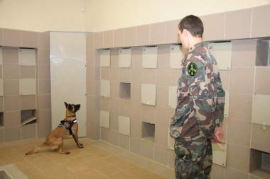 Po apatiniais neštus narkotikus suuodė tarnybiniai šunys
