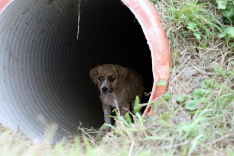 Gyvūnų globėjams šuniukus tenka gelbėti ir iš sąvartyno