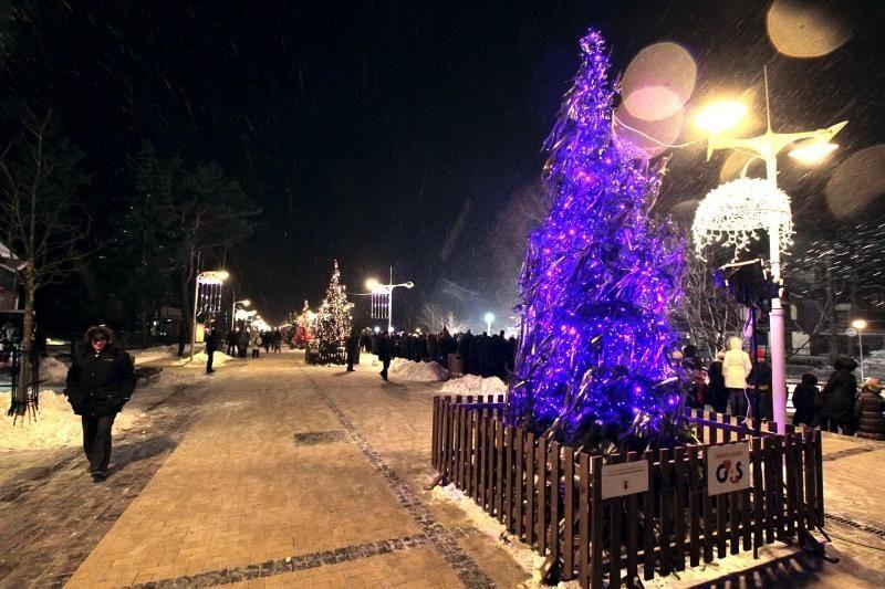 Palangą papuošė aukštaūgių eglių kalėdinė alėja