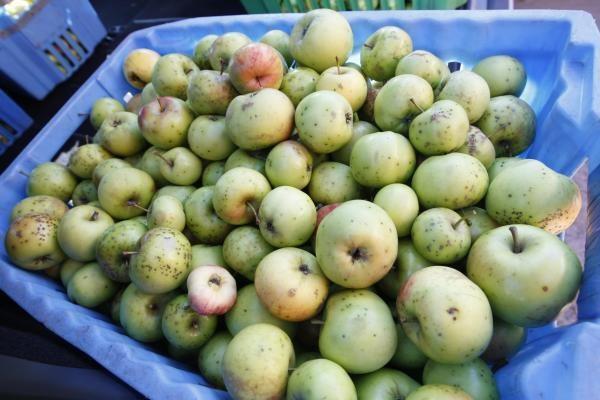 Pirkėjai graibsto lietuviškus obuolius
