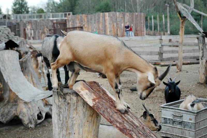 Klaipėdai nori padovanoti egzotiškų gyvūnų